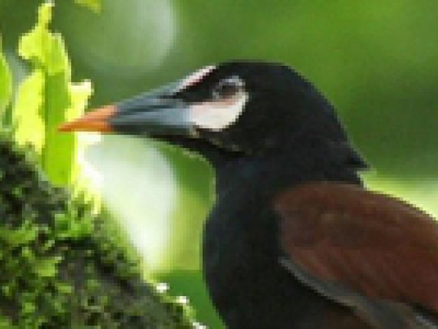 Colômbia investe no turismo de observação de aves